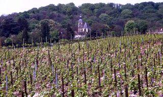 CotesDesBlancsChouilly-Cramant-Chateau-de-Saran